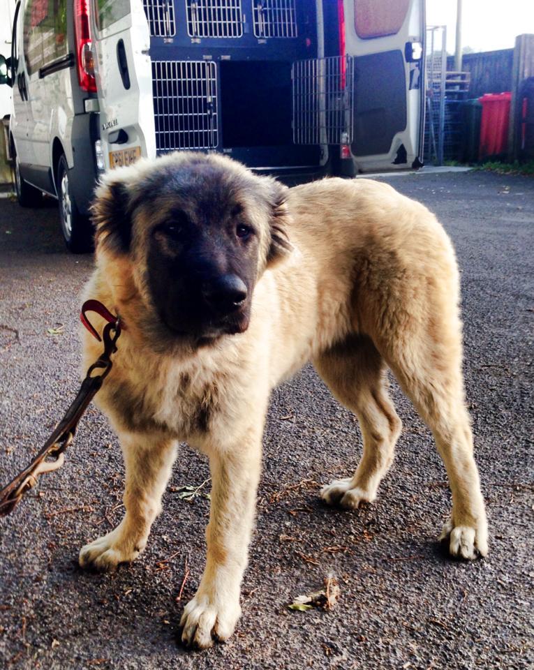 Go Fetch Ltd - Pet transport specialists - testimonials